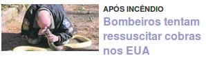 Bombeiros tentam ressuscitar cobras nos EUA